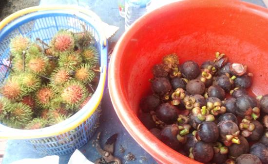 buah rambutan buah manggis