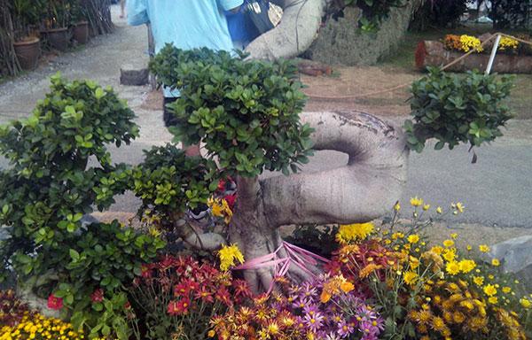 bunga floria putrajaya 2013
