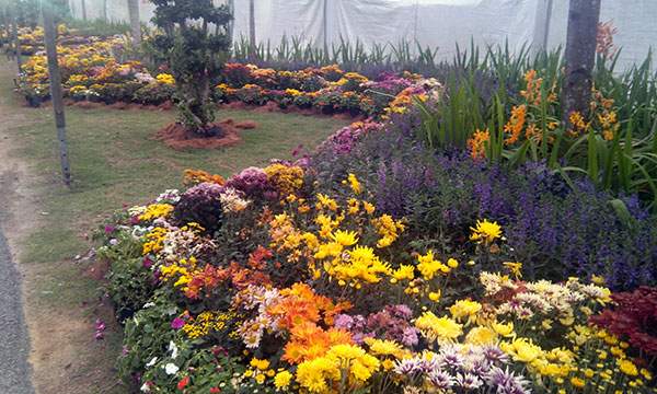 bunga pesta floria putrajaya