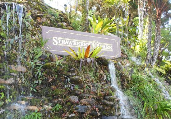 strawberry-park-resort-cameron-highland