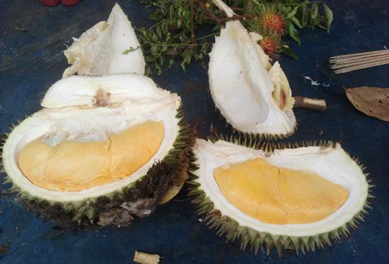 durian raja buah tempatan