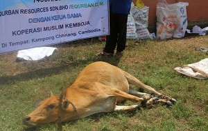 lembu equrban kemboja
