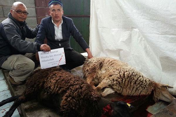 Sembelihan aqiqah kambing di Kazakhstan