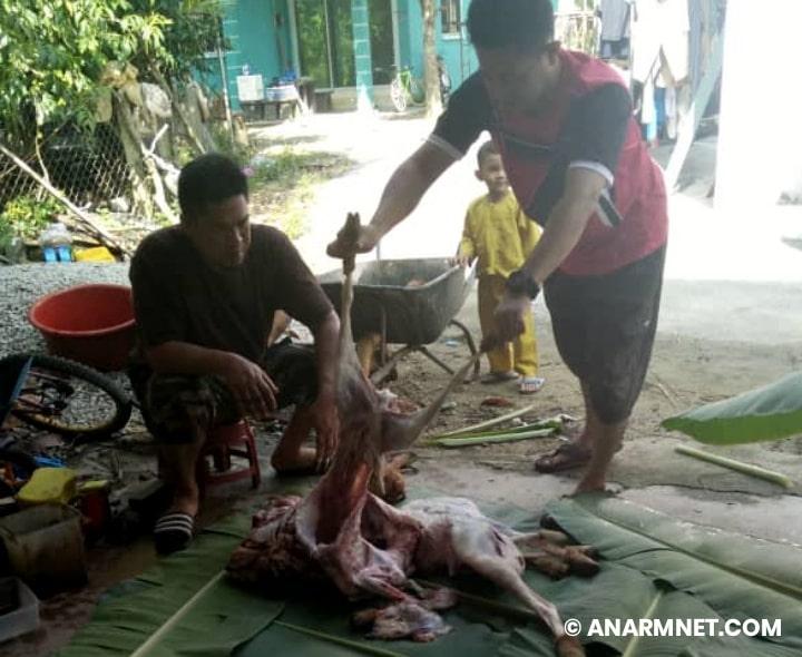 Lapah daging kambing korban